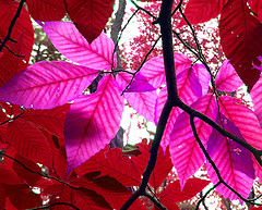 Free Pink and Red Leaves October Peace