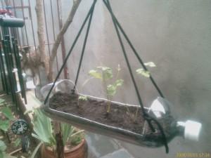 Outra idéia para sementeira