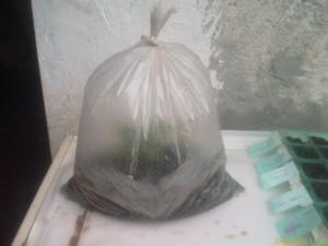 Estacas de galhos com o saco fechado