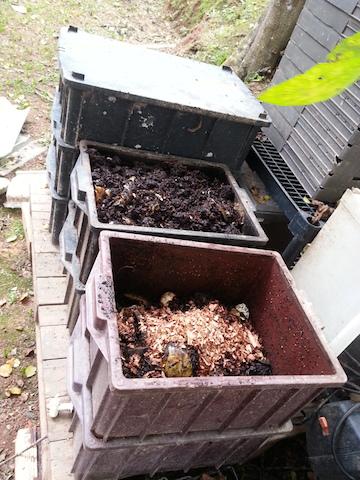 Cinco passos para fazer compostagem doméstica